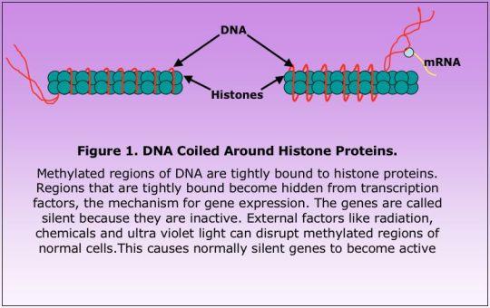 Epigenetics2